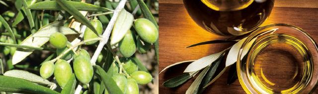 オリーブオイルの種類は大きく分けて2つ