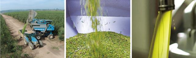 ノンフィルター製法のエキストラバージンオリーブオイルは希少な逸品